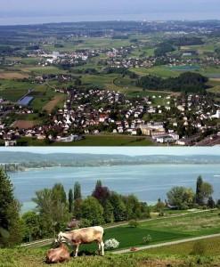 Pastoral scene in Thurgau - Courtesy of Wikimedia